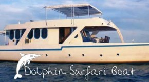 Surf Boat Dolphin Surfari