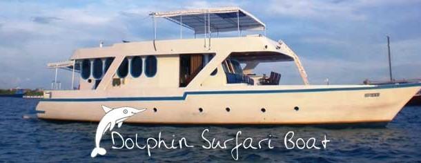 Surf Boat Dolphin Surfari